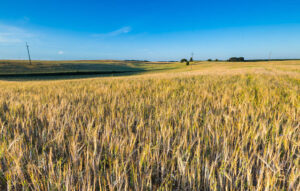 How Do Land Trusts Work?
